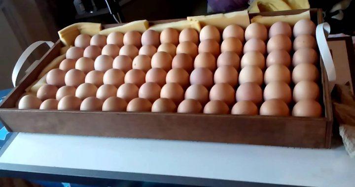 Закладка яиц в инкубатор: как не испортить все