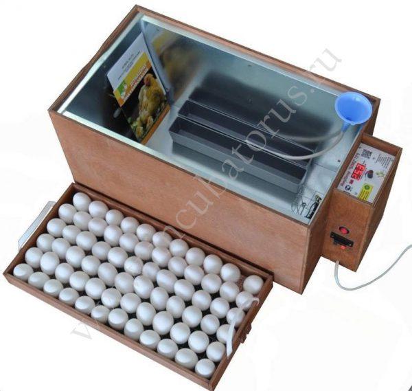 цифровой инкубатор