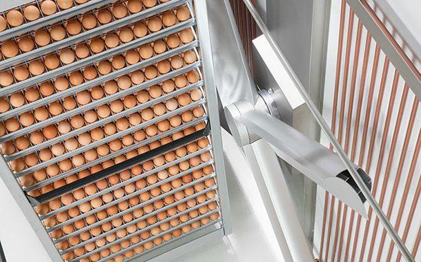 Влажность и вентиляция в инкубаторе
