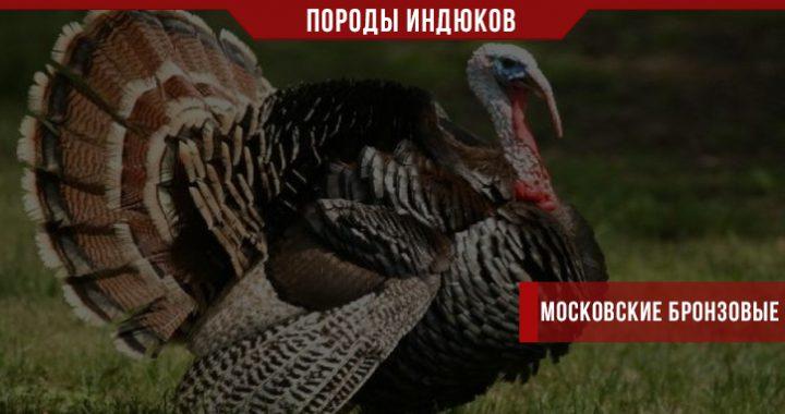 Московские бронзовые индюки