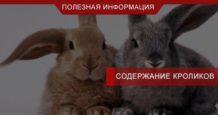 Где купить клетки для кроликов для построения бизнеса