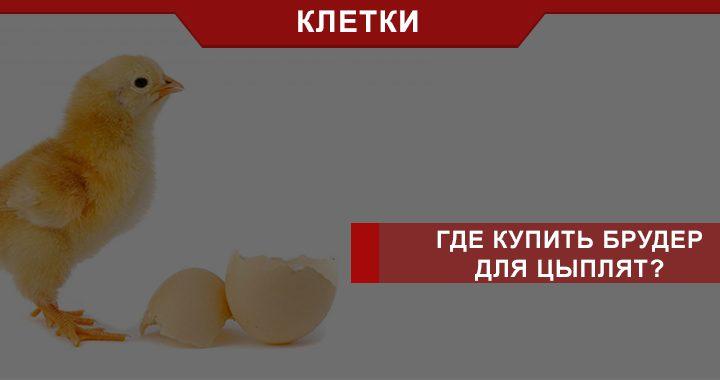 как выбрать брудер для цыплят