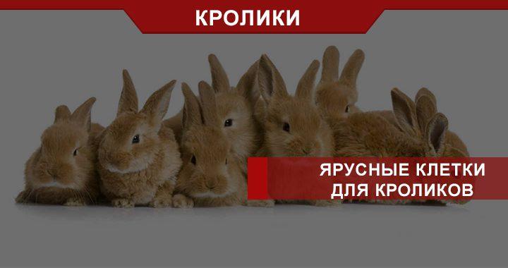 Ярусные клетки для кроликов