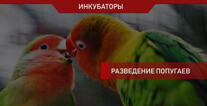 Какой выбрать инкубатор для яиц попугая