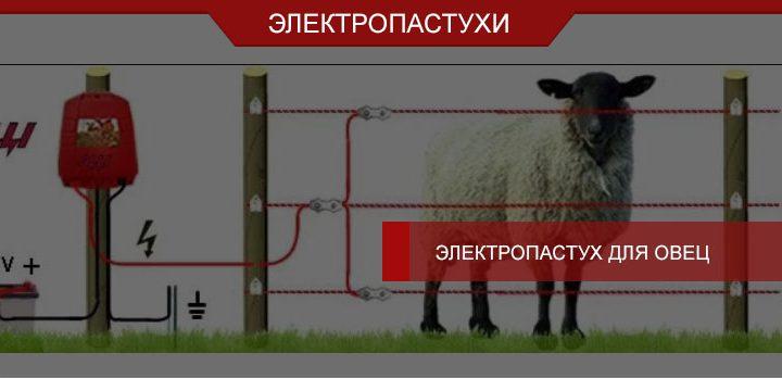 Электропастух для овец: особенности использования, советы
