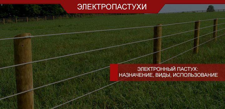 Электронный пастух: назначение, виды, использование