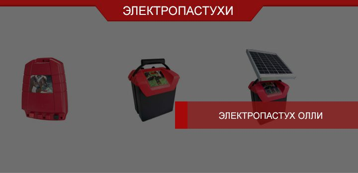 Электропастух Олли: организованный выпас при любых обстоятельствах