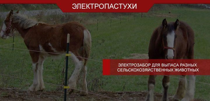 Электрозабор для выпаса разных сельскохозяйственных животных