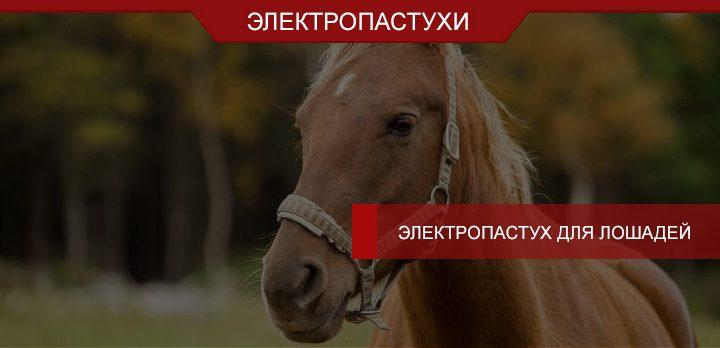 Электропастух для лошадей – безопасный выпас и выгул