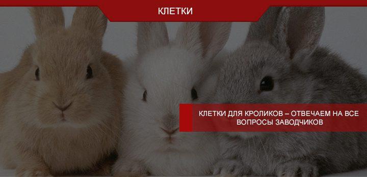 Клетки для кроликов – отвечаем на все вопросы заводчиков