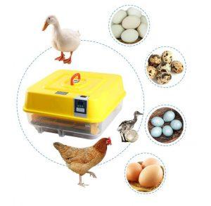 Как выбрать инкубатор для яиц, если ничего об этом не знаешь